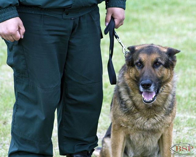 Agent de sécurité cynophile / Maitre chien